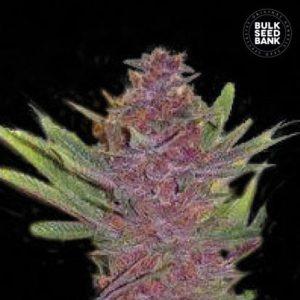 Auto Purple Glam Kush