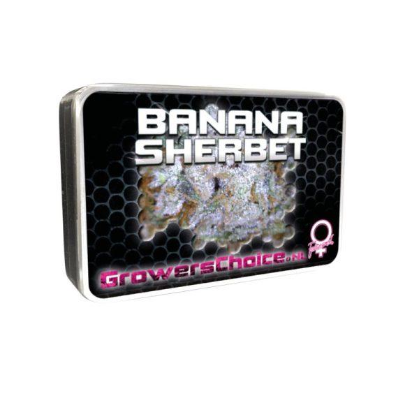 Banana Sherbet Feminised