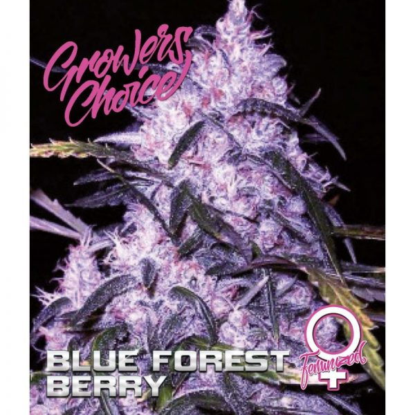 Blue Forest Berry Feminized