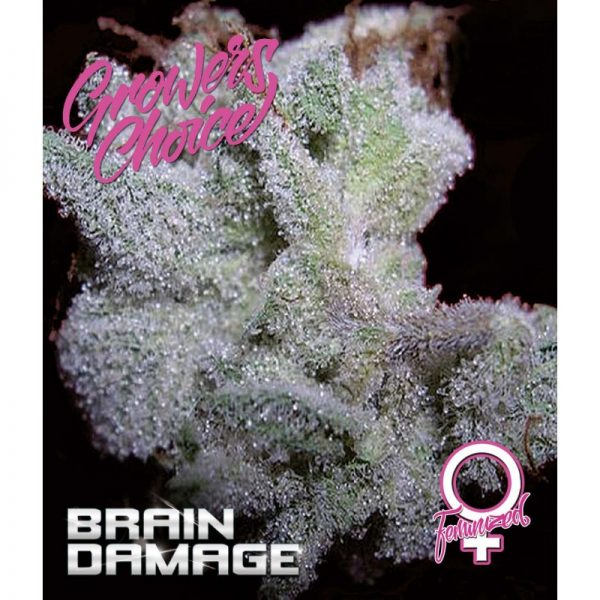 Brain Damage Feminised