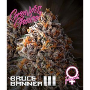 Bruce Banner III Feminised
