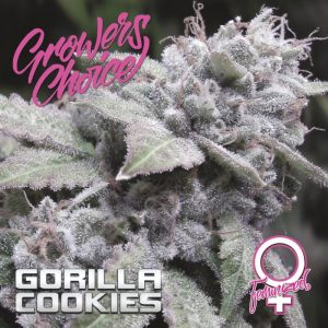 Gorilla Cookies Feminised