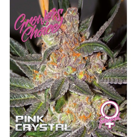 Pink Crystal Feminized
