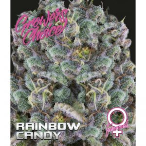 Rainbow Candy Feminized