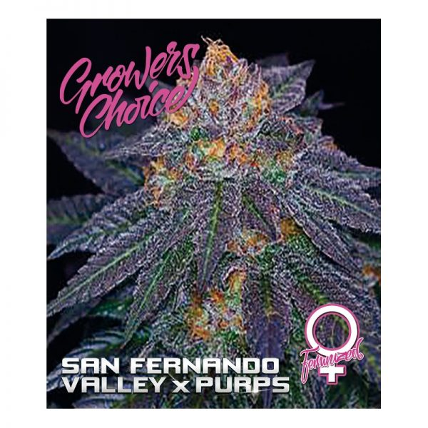 San Fernando Valley x Purps Feminized