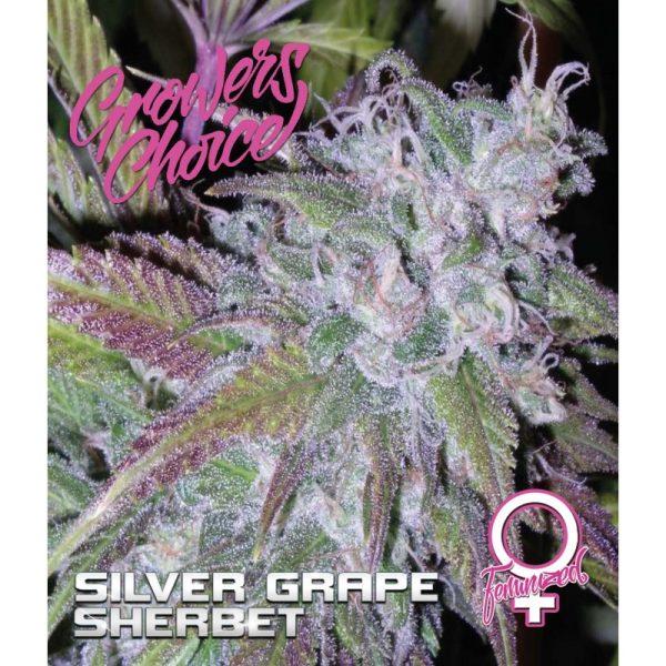 Silver Grape Sherbet Feminized