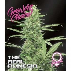 The Real Amnesia Feminized