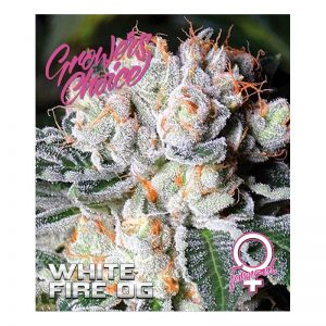White Fire OG Feminized
