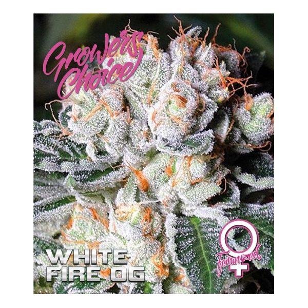 White Fire OG Feminized