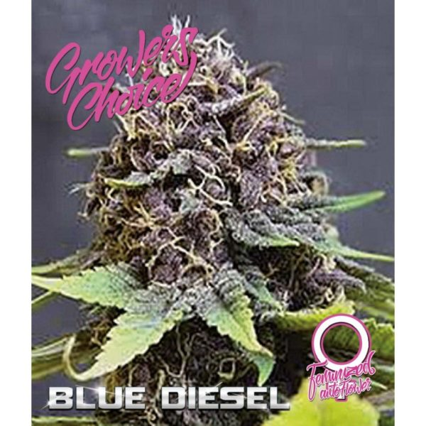 Blue Diesel Autoflower