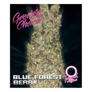 Blue Forest Berry AutoFlower