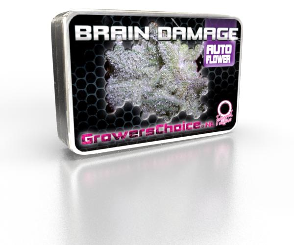 Brain Damage Autoflower