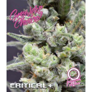 Critical+ Autoflower