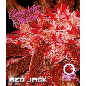Red Jack Autoflower
