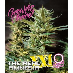 SuperLarge XXL Amnesia Feminized Autoflower
