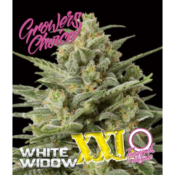 XXL Mix Pack AutoFlower