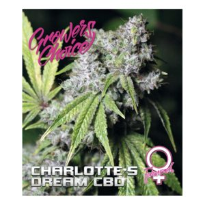 Charlotte's Dream CBD Feminized