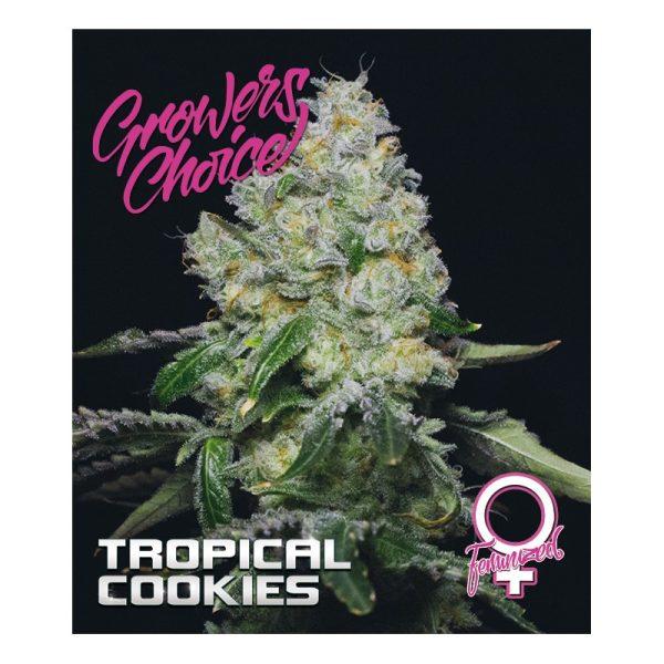 Tropical Cookies Feminized