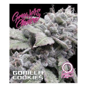 Gorilla Cookies Autoflower