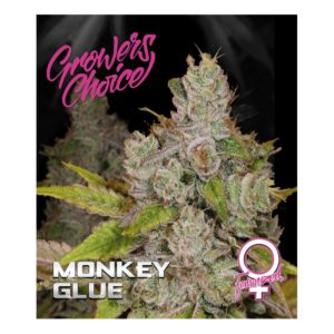Monkey Glue Feminised