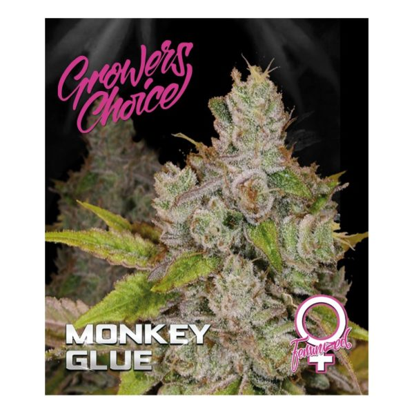 Gorilla Glue 4 Aka. Monkey Glue Feminised