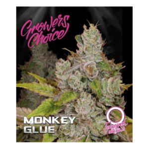 Monkey Glue Autoflower