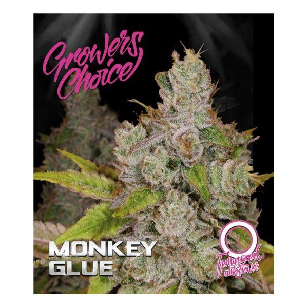 Gorilla Glue 4 Aka. Monkey Glue Autoflower