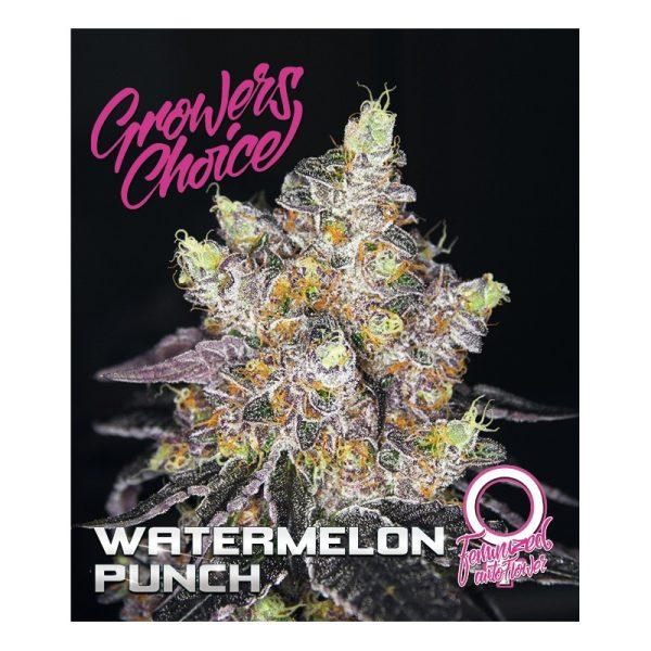 Watermelon Punch Autoflower