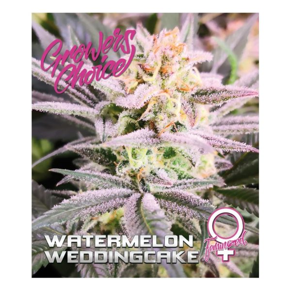 Watermelon Weddingcake Feminized