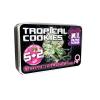 Tropical Cookies Double XL Autoflower