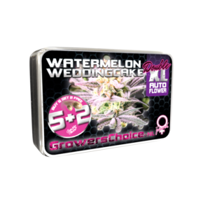 Watermelon Weddingcake Double XL Autoflower