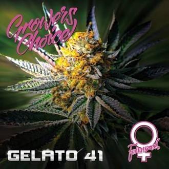 Gelato 41 Feminized
